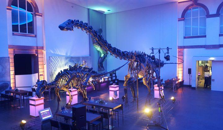 Dino bei Nacht