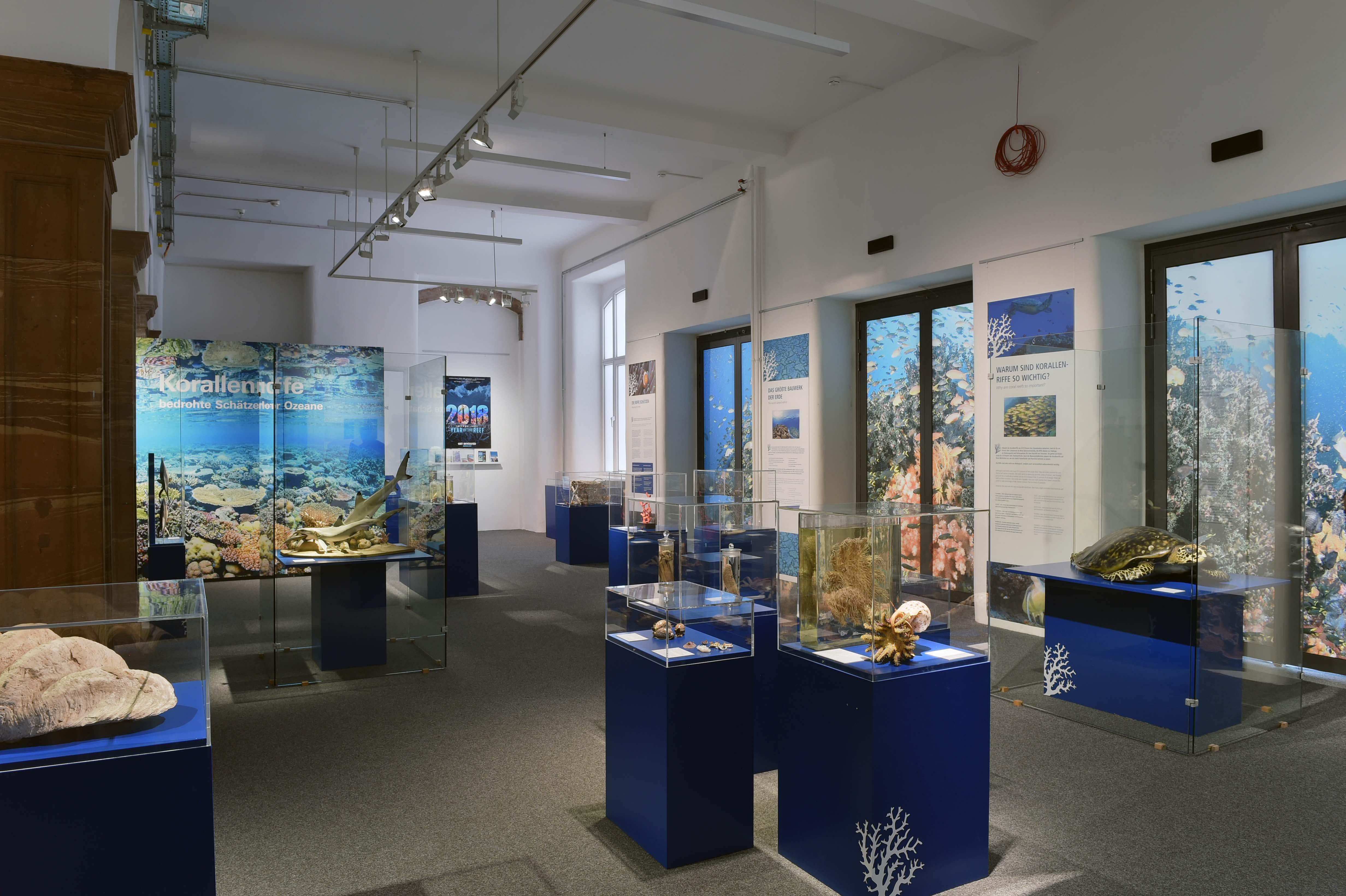 Korallenriffe Ausstellungsraum