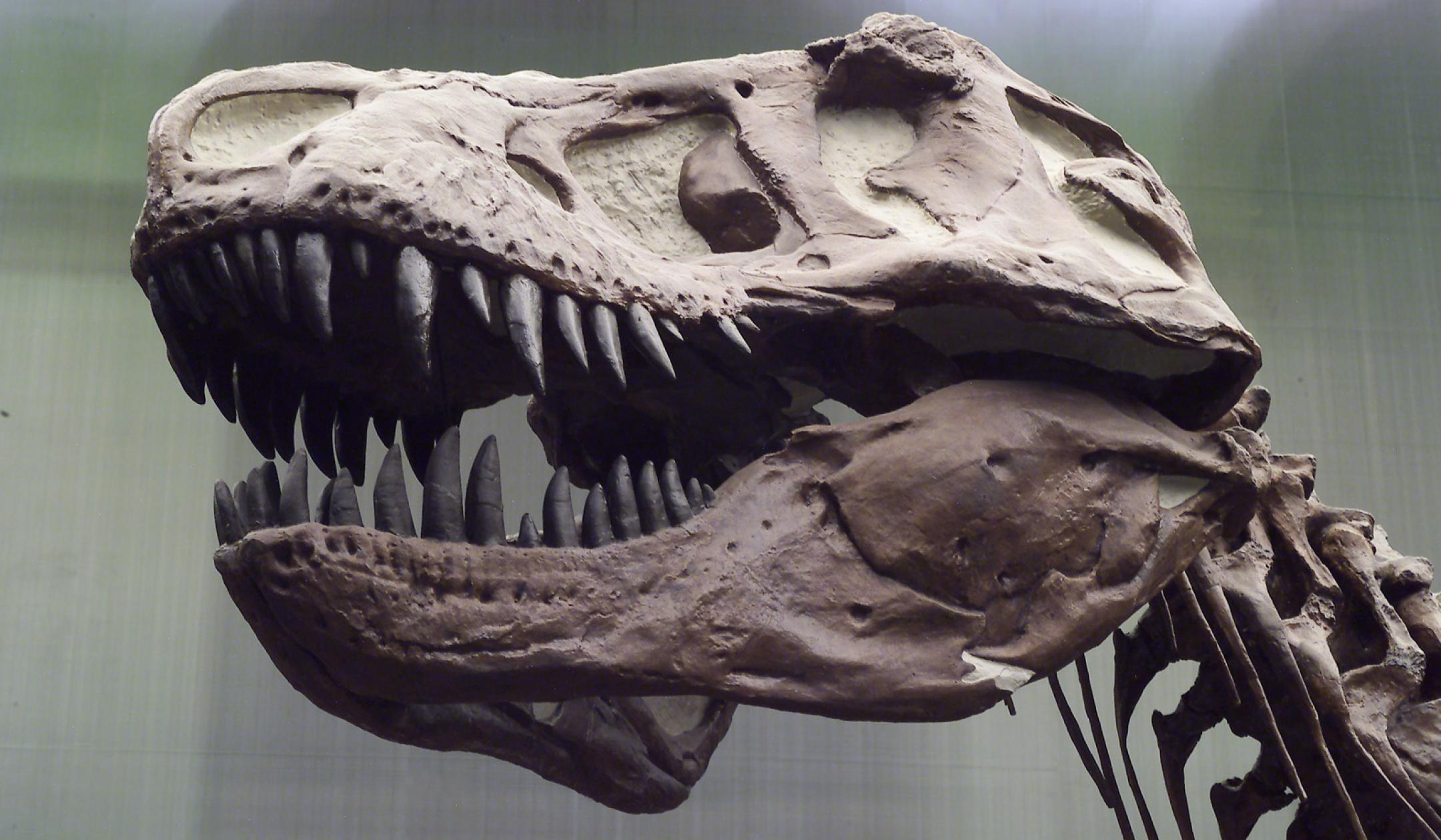 T-Rex Dauerausstellung