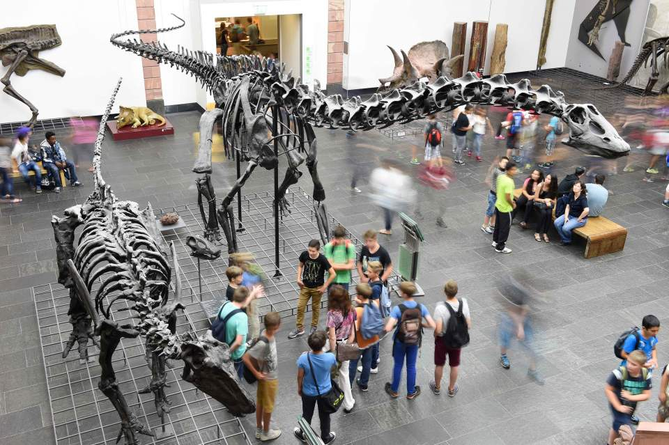 Iguanodon bernissartensis und Diplodocus longus