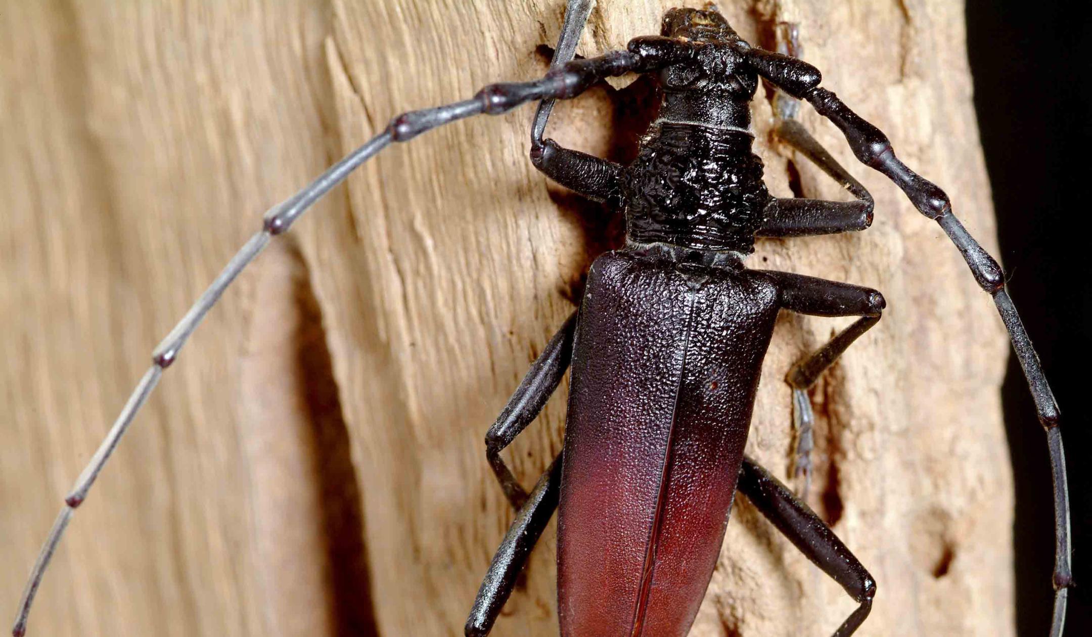 Insekten Ausstellung