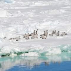 PM Biodiversität unter Druck 23.01.2020