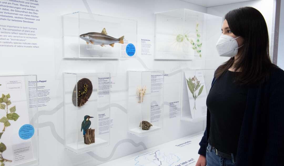 Ausstellung Flüsse 28 Lebensraum Fluss c Senckenberg Tränkner