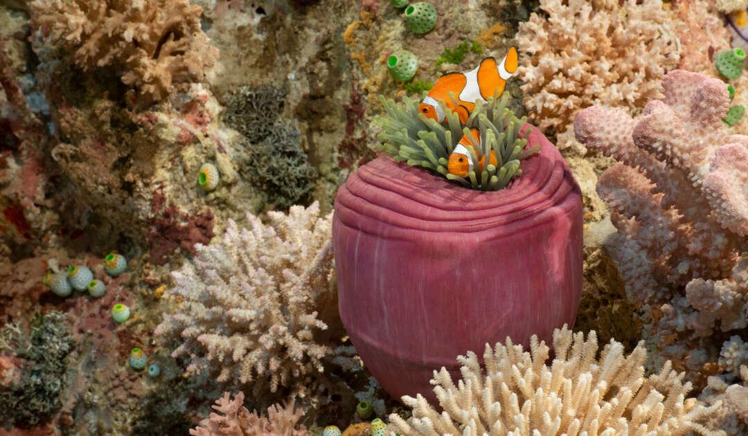 Korallenriff Frankfurt